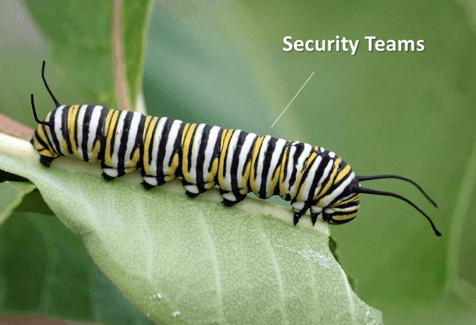 Disruptive Transformation: What Caterpillars Can Teach Us about Cybersecurity in the Pandemic-Era